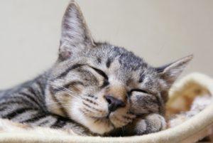 ゼンリー 睡眠中